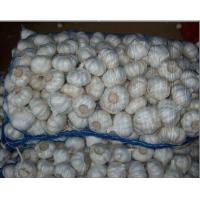 Buy cheap Factory supply Best quality normal white garlic with lowest price from wholesalers