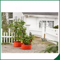 Wholesale Weatherproof Organic Grow Bags , Tomato Planter Bag With Multi Function from china suppliers