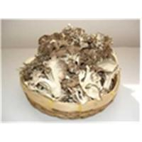 Wholesale Sliced Maitake Mushroom from china suppliers