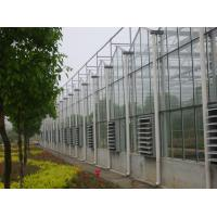 Quality 4000mm section Multi - span Commercial glass greenhouses for agriculture for sale
