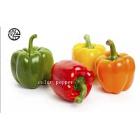 Wholesale Anti - Cancer Multi Colored Peppers High Nutritional And Edible Value from china suppliers