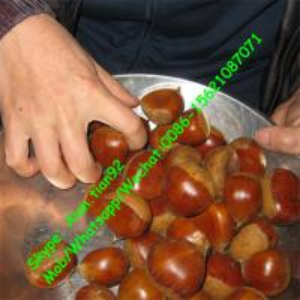 China Dandong Chestnut 5kg Gunny Bag Packaging Fresh chestnut (30-40Pcs/kg) on sale