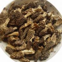 China Fresh Morel Mushrooms/Toadstools, Has Always Been Legendary for Offerings on sale