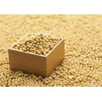 Wholesale Organic Soybean Extract Powder 40% Isoflavones to improve brain function and dementia from china suppliers