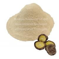 Quality Sell Certified Kosher Soup Ingredient Freeze Dried Shiitake Mushroom Powder for sale