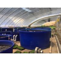 Wholesale 1000gallon Round large Open Top Aquaculture plastic fish farm tank for shrimp and fish from china suppliers
