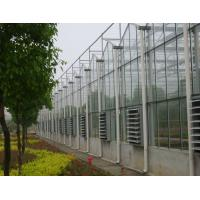 Wholesale single film / inflation film / glass Commercial Venlo greenhouse , 9600mm span from china suppliers