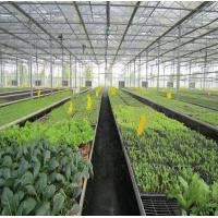 Wholesale 5kw Greenhouse Solar System Ground Mount 10-60° Tilt Angle Thickness 2.0mm/2.5mm from china suppliers