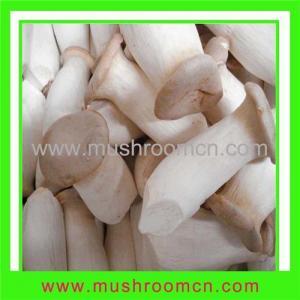 China Fresh king oyster mushroom on sale
