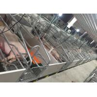 China Designing Farrowing crate for sale Pig Farm Equipments Farrowing Pen with slat fooring for sale