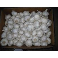 Buy cheap 2014 new crop high quality garlic with good taste and cheaper price from wholesalers