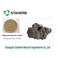 Wholesale Anti-Tumor Chage extract Male Enhancement Powder Mushroom Extract Powder from china suppliers