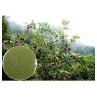 Wholesale Myricetin 10% - 95% Natural Anti Inflammatory Supplements Bayberry Root Bark Powder from china suppliers