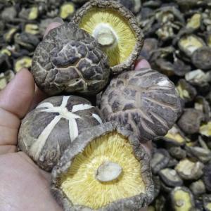 China Factory Price Premium  Bulk Dried Tea Flower Mushroom Shiitake Whole with Cap 4-6CM on sale