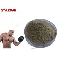 Wholesale Natural Oyster Extract Sex Steroid Hormones Raw Powder Pharmaceutical / Food Grade from china suppliers