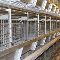 Wholesale Automatic Poultry Farmimg Equipments 128birds H Type Hot Galvanized Egg Chicken Battery Cage Poultry Coop from china suppliers