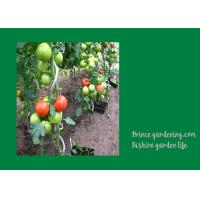 Wholesale 8mm Colorful Spiral Plant Support , Durable Garden Spiral Tomato Stakes from china suppliers