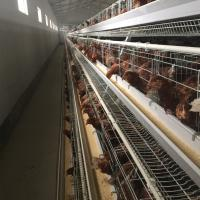 Chicken Use And Steel Material 128 Birds Capacity Battery Breeding Cages For Layers