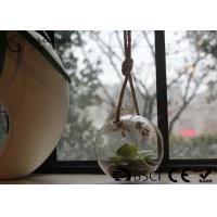 Wholesale Clear Glass Hanging Terrarium / Hanging Glass Plant Holders Anti Corrosion from china suppliers
