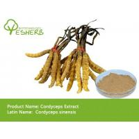 Quality wholesale Chinese cordyceps extract polysaccharide 50% with best price free sample for sale