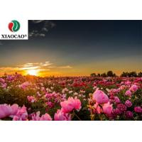 China Antidepressant Damask Rose Oil Reduce Scarring Specification 90 Percent on sale