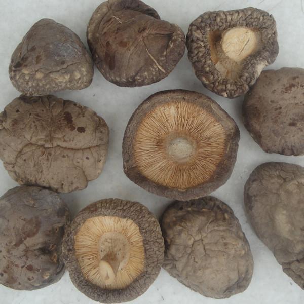 Quality Dried Shiitake Mushroom for sale