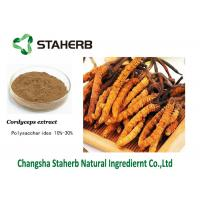 Wholesale Mushroom extract Cordyceps extract Polysaccharides Male Enhancement Powder from china suppliers