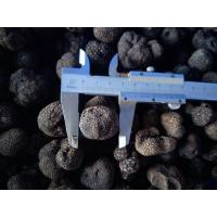 China Factory Price Premium Grade Chinese Fresh Truffle 1-3CM/3-5CM/5CM above on sale
