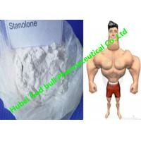 Wholesale Stanozolol Winstrol Bulking Cycle Steroids , GMP white crystalline powder from china suppliers