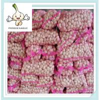 Wholesale garlic factory and cold storage From China 20kg mesh bag Normal White Garlic from china suppliers