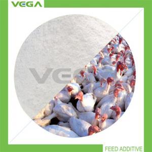 China Clostridium Butyricum Feed Additive on sale