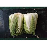 Wholesale Fresh Organic Chinese Cabbage No Stain Green Color For Salad Factory from china suppliers