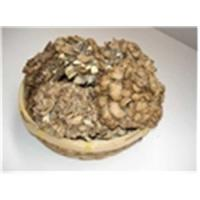 Wholesale Grifola Frondosa(Maitake) from china suppliers