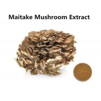 Wholesale Improving Immunity Maitake Mushroom Extract , 30% Polysaccharides Maitake Mushroom Powder from china suppliers