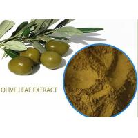 Wholesale Organic Olive Leaf Extract For High Blood Pressure ,  Pure Olive Leaf Extract Super Strength from china suppliers