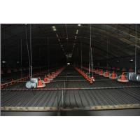 Wholesale Suspension Lifting System for Poultry Farm Equipment from china suppliers