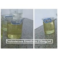 China Testosterone Enanthate Steroids Injections Testosterone Enanthate 250mg/ml on sale
