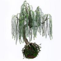 Wholesale Q117-9 Realistic Artificial Plants Home Decor Plants Weeping Willow With Plastic Base from china suppliers