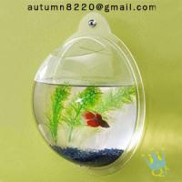 Wholesale acrylic wall mount fish bowl from china suppliers