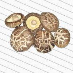 China Dried Shiitake Mushroom for sale