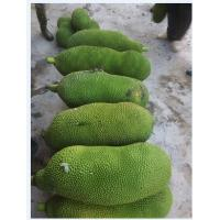Wholesale Organic jackfruit from china suppliers