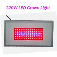 Wholesale OEM Customized Led Plant Growing Lighting 120W AC85 - 265V Red / Blue 300mA from china suppliers
