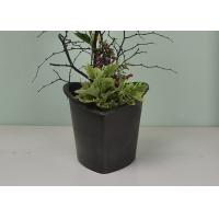 China Flower / Green Plant Self Watering System Bsci Certification With Absorbent Wool on sale