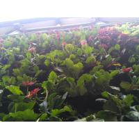 Wholesale Eco - Friendly Potato Plant Grow Bags / Vegetable Planter Bags 6 Years Life from china suppliers
