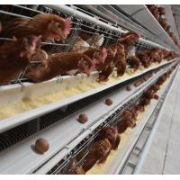 Wholesale Huaxing Brand 120birds Chicken Layer Cages Factory Price Poultry Battery Cage For Sale Zambia Ghana Farm from china suppliers