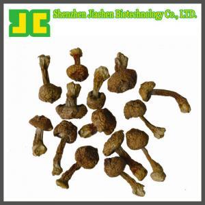 China Agaricus blazei Murill Extract 5:1~20:1 on sale