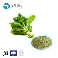 China Organic Natural Vegetable Powder / Natural Plant Extracts Spinacia Oleracea L on sale