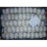 Buy cheap fresh pure white garlic from wholesalers