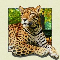 Wholesale Custom Lenticular Image Printing For Gift , 5d Animal Collage Poster 15.7x15.7 Inches from china suppliers