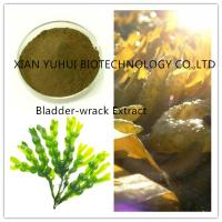 Wholesale 100% natural bladderwrack extract ,0.3%iodine,0.2% Iodine, 5% iodine from china suppliers